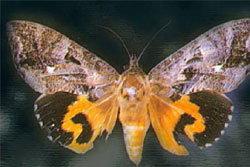 ประกาศเขตภัยพิบัติ จ.ประจวบฯ แมลงอาละวาดหนัก