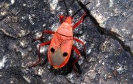 ฮือฮา! ชาวสุพรรณ แห่ดู แมลงหน้าคน บุกวัด