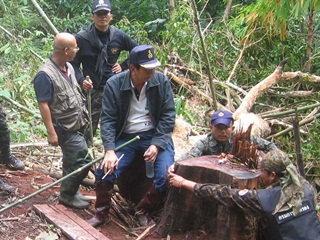 ผู้ว่าฯ กาญจนบุรีลุยป่าสังขละจับขบวนการตัดไม้