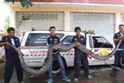 สยอง! งูเหลือมยักษ์ยาวกว่า 5เมตรรัดหมาตาย