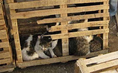 ตร.บุกช่วยแมวนับร้อย ก่อนถูกส่งร้านอาหารจีน