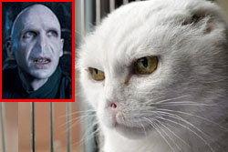 แปลก! แมวจรจัดหน้าเหมือนพ่อมดชื่อดัง