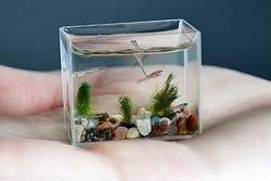 ตะลึง! ตู้ปลาเล็กที่สุดในโลก