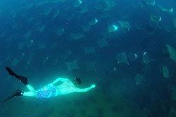 ใจเด็ด! ดำน้ำท่ามกลางปลากระเบนปีศาจนับพัน