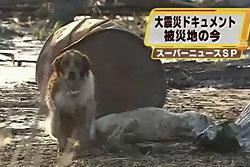 ซึ้ง! สุนัขเฝ้าเพื่อนเจ็บจากเหตุสึนามิ ญี่ปุ่น