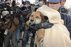 เฮ! สุนัขอึดรอดสึนามิ ญี่ปุ่น พบเจ้าของแล้ว