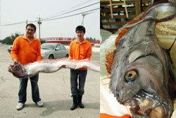 ประมงไต้หวันจับปลาแผ่นดินไหว หวั่นเกิดอาเพศ