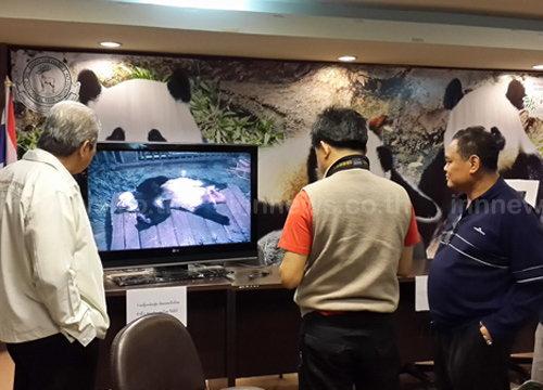 ทีมวิจัยลุ้นหลินฮุ่ยเบ่งคลอดครั้งแรก-เฝ้าระวัง