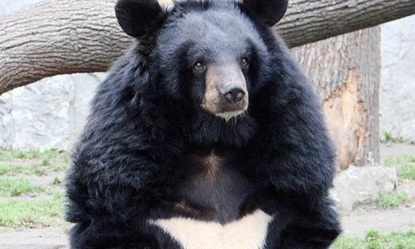หนุ่มจีนสะดุ้ง! ซื้อหมาเลี้ยง 2 ปี แต่โตมากลายเป็นหมี