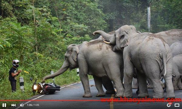 ภาพระทึก หนุ่มขี่ จยย.ทิ้งรถ-ยกมือไหว้ ขอขมาโขลงช้างป่า