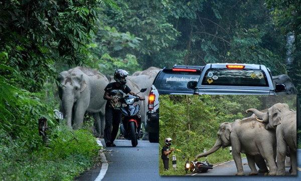 คนอยู่ในเหตุการณ์ เล่านาทีระทึกโขลงช้างป่าล้อมหนุ่มขี่จยย.