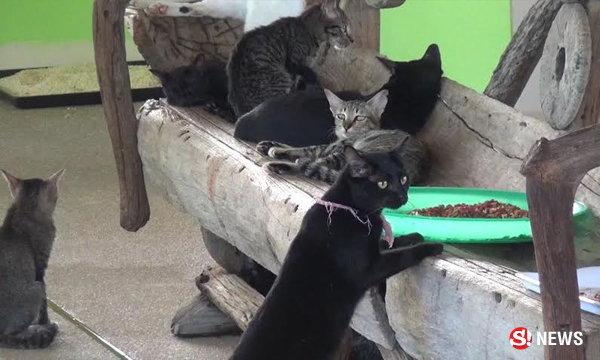 ใช้แมวล่อ! บุกจับมูลนิธิช่วยสัตว์จรจัด เบื้องหลังเปิดทำหมันเถื่อน