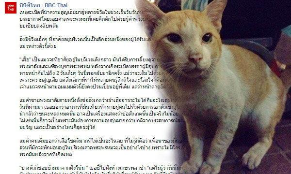 อีกหนึ่งชีวิตแมวในศาลพระพรหม  หลังเหตุระเบิดราชประสงค์