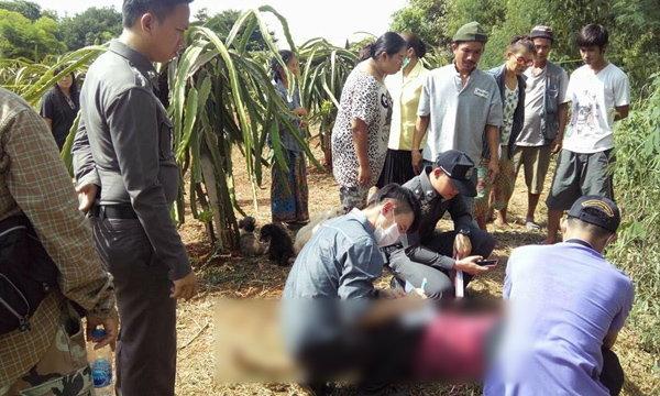 4 สุนัขนอนเฝ้าศพไม่ห่าง สาวใหญ่ถูกฆ่ากลางสวนแก้วมังกร