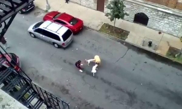 ภาพสยอง! หมาพิตบูลรุมขย้ำกัดคน กลางเมืองนิวยอร์ก