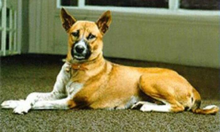 คุณทองแดง สุนัขทรงเลี้ยง เสียชีวิตแล้ว รวมอายุ 17 ปี