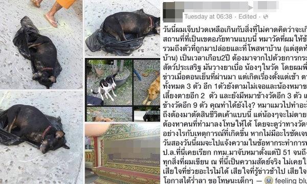 แชร์ว่อนเน็ต! หมาแมววัดดัง ถูกจับใส่ถุงดำโยนลงน้ำจนตาย