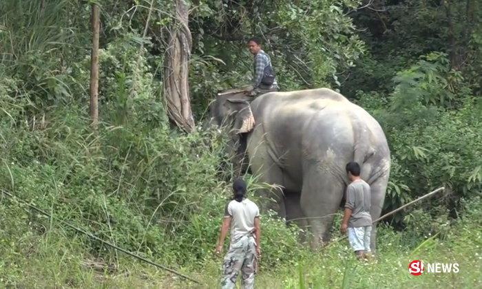 """ช้างดารา """"พลายเอกสิทธิ์"""" ทำร้ายควาญคู่ใจดับคาสวนสัตว์"""