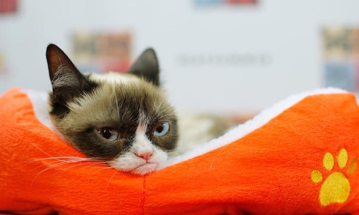 คดีแมวแมว เจ้าเหมียวกรัมปี้ชนะคดีลิขสิทธิ์รวยเละ รับเงิน 23 ล้านบาท