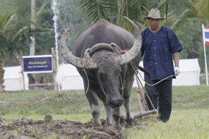 ดร.สุเมธ แนะประเทศไทยจะรอดเพราะควาย ไม่ใช่โรงงานอุตสาหกรรม