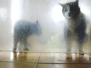 ตรวจพบเชื้อหวัด 2009 ในแมวเป็นครั้งแรก