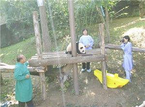 เตรียมเจรจาจีนขอยืดเวลาอีก 2 ปี หลินปิงอยู่ไทย