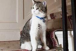 แลรี่ แมวที่จะมากู้หน้าตาให้เมืองผู้ดี