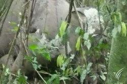 ช้างป่าอายุ 40 ถูกฆ่าเอางา