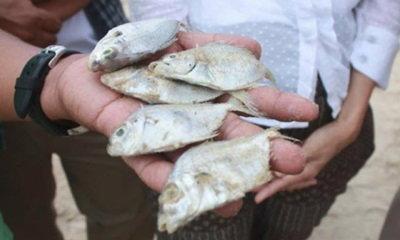 ผู้ว่าฯ ระยองตรวจปลาตายเกลื่อนหาดแม่รำพึง