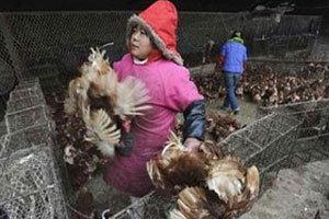อนามัยโลกระบุ ยังไม่มีหลักฐานยืนยันไข้หวัดนกระบาดในจีน
