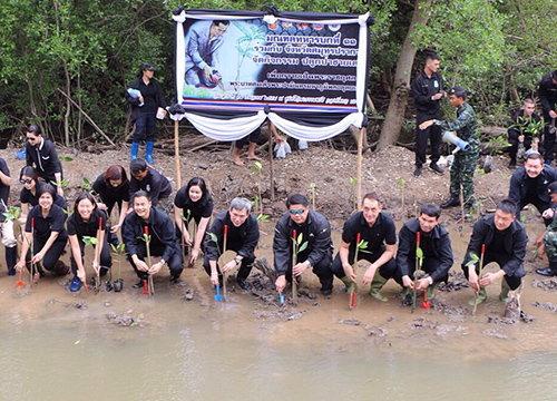 มทบ.11ปลูกป่าชายเลนเฉลิมพระเกียรติ