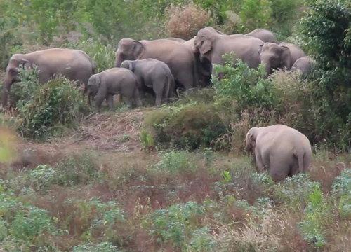 ชาวสวนยางจันทบุรีผวาโขลงช้างป่ากว่า30ตัว