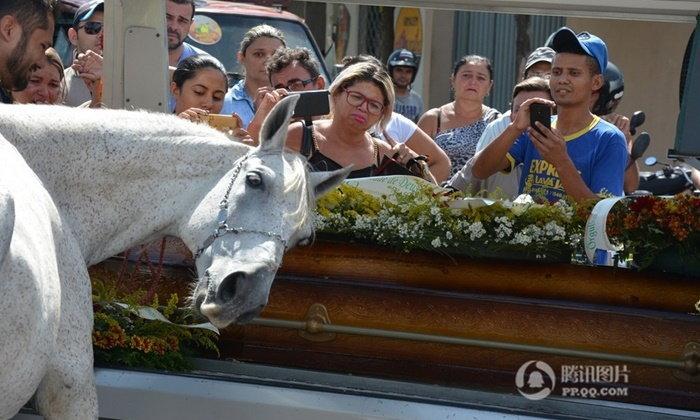 ม้าเศร้า! คลอเคลียโลงศพอำลาเจ้าของ หลังประสบอุบัติเหตุเสียชีวิต