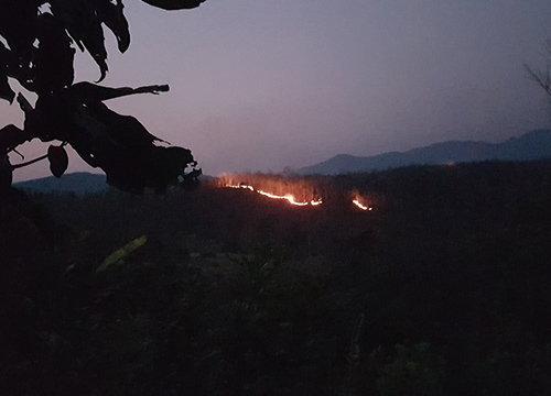 ไฟป่าลุกลามหลายพื้นที่แพร่เหตุคนหาของป่า