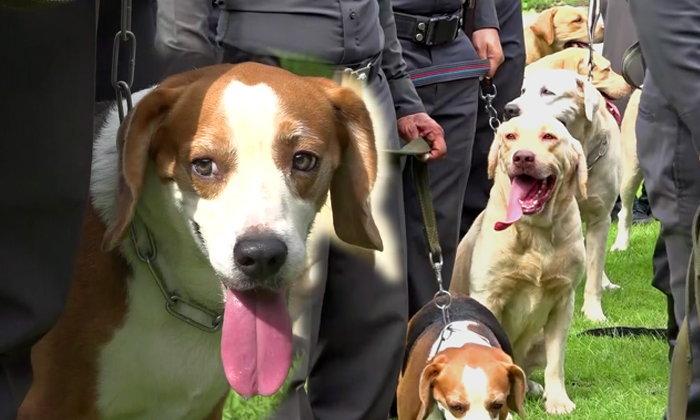 ตั้งกองทุนบำนาญช่วยสุนัขตำรวจปลดประจำการ  ตอบแทนหลังช่วย จนท.