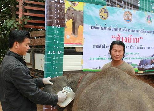 ปศุสัตว์ชัยภูมิตรวจDNAช้างป้องกันนำสวมสิทธิ์