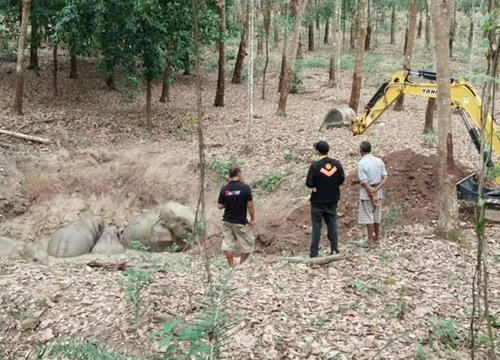 ช้างป่าจันทบุรีตื่นเสียงดังแตกโขลงพลัดตกสระน้ำ