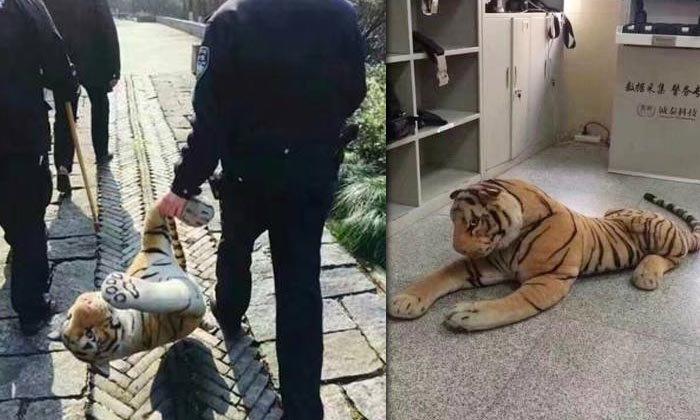 โอละพ่อ! ตำรวจจีนล้อมจับตุ๊กตาเสือ หลังชาวบ้านแจ้งเจอบนเขา
