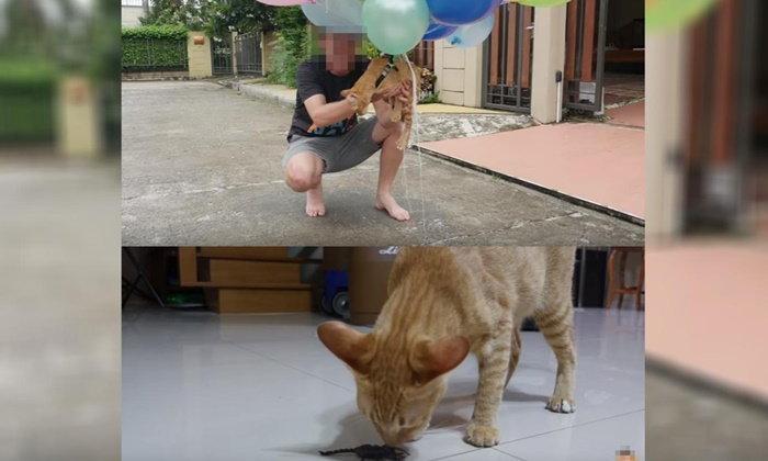 """เพจแมวชื่อดัง จ่อฟ้อง! """"My Mate Nate"""" ข้อหาทารุณกรรมสัตว์"""
