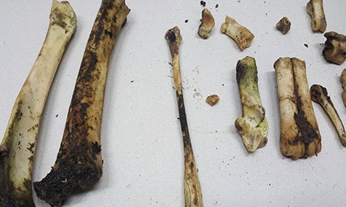ญาติ ผอ.อ้อย พบกระดูกมนุษย์ในป่าพลาญเสือ-เร่งส่งพิสูจน์