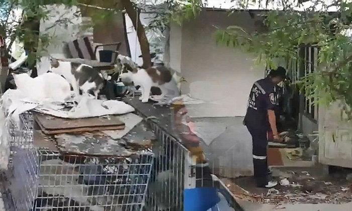 สาวใหญ่ผูกคอดับ พบสุนัข-แมวที่เลี้ยงไว้จำนวนมาก ล้อมเฝ้าศพ
