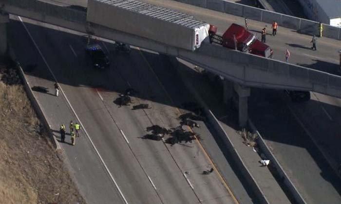 รถบรรทุกวัวคว่ำบนสะพานในสหรัฐฯ ร่วงตายเกลื่อน 25 ตัว