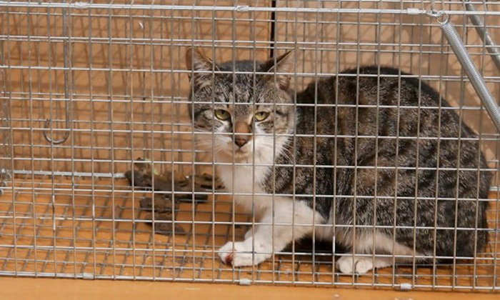 ชายญี่ปุ่นติดคุก 22 เดือน จับแมวจรขังและฆ่าถ่ายคลิปโหด