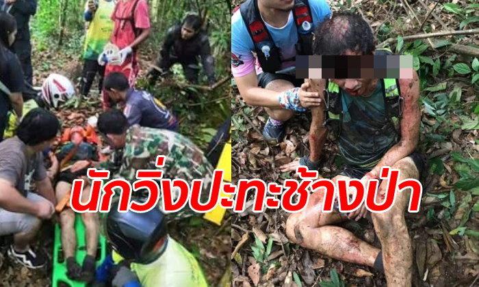 ช้างป่าฟาดงวงใส่ นักวิ่งเทรล บาดเจ็บหนัก ดราม่าถล่มยับเส้นทางจัดงานรุกป่า!