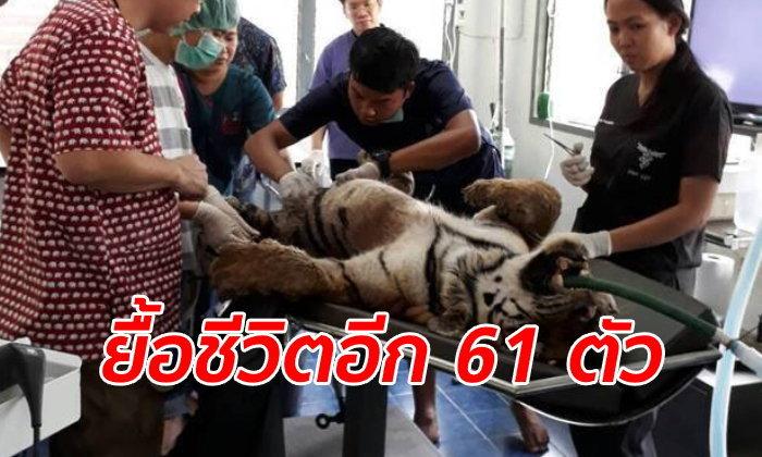 """""""หมอล็อต"""" ตอบข้อสงสัย เสือวัดหลวงตาบัวตาย 86 ตัว ป่วยเพราะผสมพันธุ์เลือดชิด"""