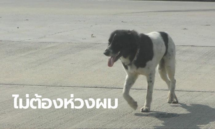 เสียแรงที่สงสาร ดราม่าหมาถูกทิ้งชะเง้อคอยเจ้าของจุดเดิม ที่แท้มาดักรอสาว