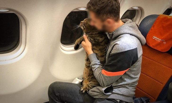 """ดราม่ากระหึ่ม หนุ่มถูกริบไมล์สะสมเกลี้ยง เหตุแอบนำ """"แมวจ้ำม่ำ"""" ขึ้นเครื่องบิน"""