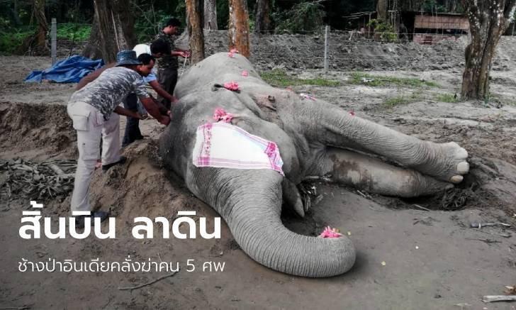 """""""บิน ลาดิน"""" ช้างป่าอินเดียล้มแล้ว หลังก่อเหตุอำมหิตสังหารหมู่ชาวบ้าน"""