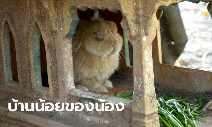 """พลิกโฉมศาลเก่าทิ้งริมถนน กลายเป็นบ้านหรูของ """"กระต่ายวัด"""" จากน่ากลัวเป็นน่ารัก"""