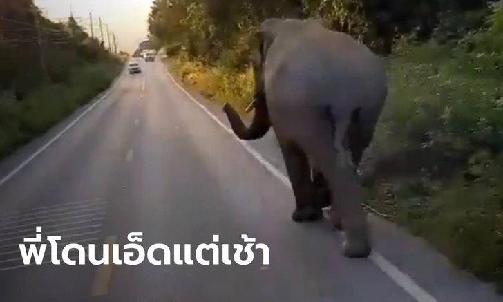 """โซเชียลเอ็นดู """"พี่บุญช่วย"""" ช้างป่าโดนเอ็ดแต่เช้า เดินเตร่ริมถนนแก่งกระจาน"""